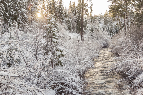 Stream amidst plants covered with snow - CAVF24001