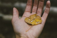 Cropped image of woman hand with dry leaf - CAVF24013