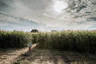 Rear view of boy at corn field against stormy clouds - CAVF24163