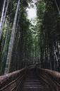 Steps amidst bamboo groove in Arashiyama - CAVF24268