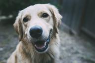 Portrait of dog - CAVF24671