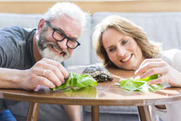 Happy mature couple feeding tortoise at home - MOEF00979