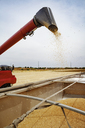 Combine harvester unloading wheat into wagon on field - CAVF25143