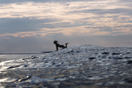 Side view of woman surfboarding on sea during sunset - CAVF26717