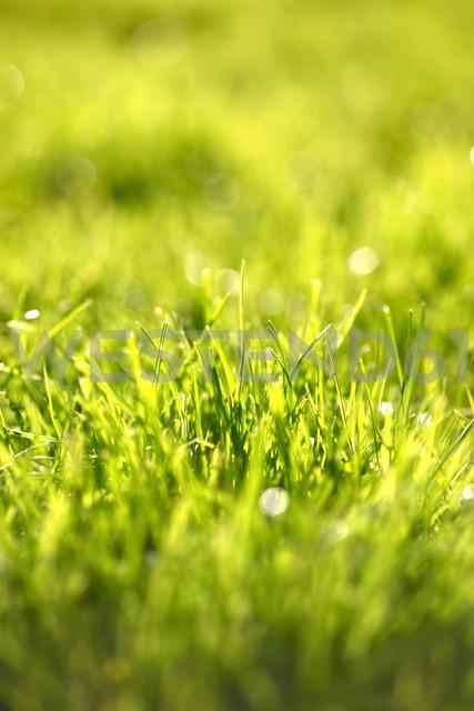 Fresh green grass, close-up - JTF00957