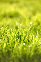 Fresh green grass, close-up - JTF00957