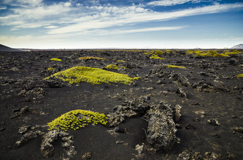 Iceland, Myvatn, Sparse mosses on volcanic rock - STCF00538