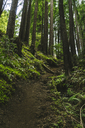 Trail amidst trees in forest - CAVF27279