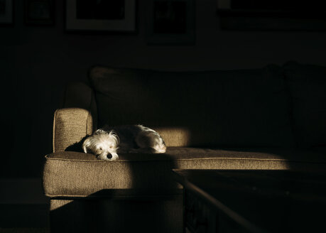 Dog sleeping on sofa at home - CAVF27531