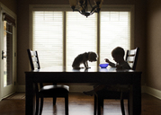 Boy eating while dog sitting on table at home - CAVF27540