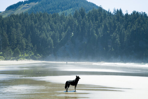 Side view of dog standing at beach by trees - CAVF28454