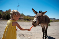 Girl feeding carrot to donkey while standing on dirt road against clear sky during sunny day - CAVF28508
