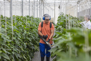 Young man working in greenhouse spraying fertilizer on plants - ZEF15206