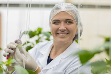 Young woman working in greenhouse, pruning vegetable plants - ZEF15209