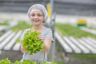 Little girl helping in greenhouse, holding lettuce - ZEF15233