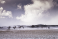 United Kingdom, Scotland, East Lothian, North Berwick, trees in snow - SMAF00986