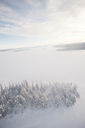 Trees and frozen lake in winter - FOLF00846