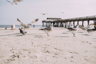 Seagulls perching at beach against sky on sunny day - CAVF28736