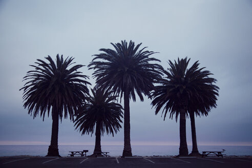 Palm trees on shore against cloudy sky - CAVF29265
