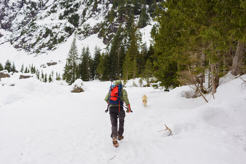 Rear view of male hiker running behind Golden Retriever on snow covered field - CAVF30364