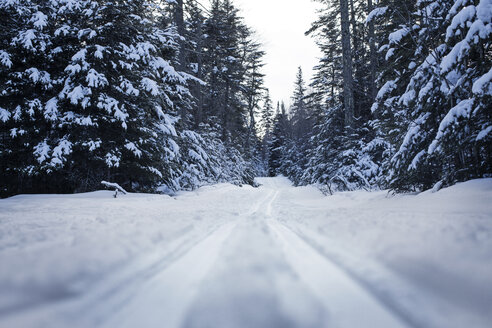 Surface level of snow covered road amidst trees during winter - CAVF30431
