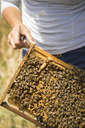 Cropped image of beekeeper holding honeycomb frame at field - CAVF30763