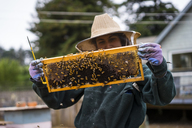 Female beekeeper inspecting beehive frame at farm - CAVF30781