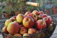 Basket full of apples - FOLF02657