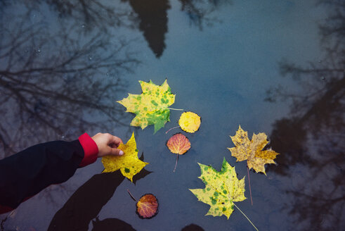 Cropped image of hand holding leaf floating in water - CAVF31092