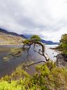 United Kingdom, Scotland, Highland, Loch Maree, freshwater lake - WDF04494