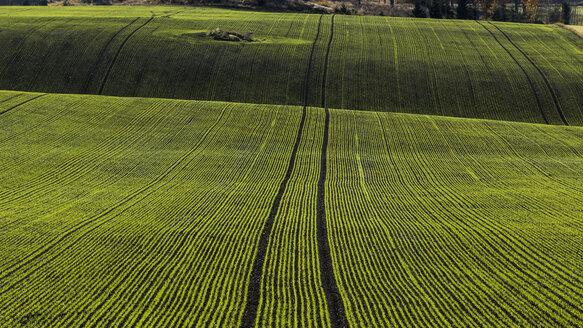 Striped green field - FOLF04056