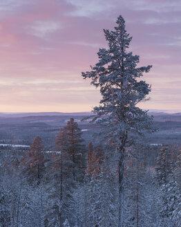 Trees at sunrise during winter in Fulufjallet National Park, Sweden - FOLF05067