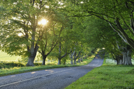 United Kingdom, England, Dorset, Beech tree lined road with sunbeams - RUEF01840