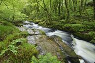 United Kingdom, England, Cornwall, Liskeard, River Fowey - RUEF01846