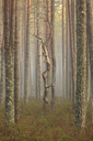 Tree trunks at a forest - FOLF05487