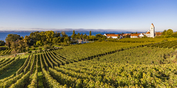 Germany, Baden-Wuerttemberg, Hagnau, Lake Constance, Church and vineyard - WDF04528