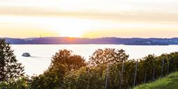 Germany, Baden-Wuerttemberg, Lake Constance, Lake Ueberlingen, Meersburg, vineyard, car ferry on the move between Meersburg and Constance, right Island Mainau at sunset - WDF04546