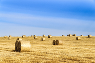 United Kingdom, Scotland, East Lothian, field and hay bales in the evening light - SMAF00995