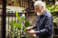 Senior man watering plants in backyard - CAVF31537