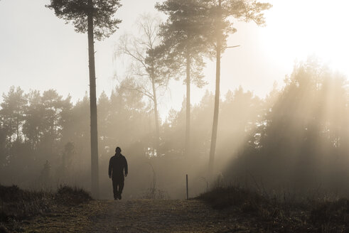 Silhouette of man walking in forest at dawn - FOLF06035