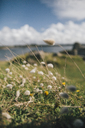 France, Brittany, Landeda, grasses on a field - GUSF00568