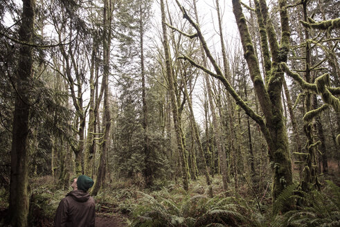 Rear view of man looking at trees in Cougar Mountain Regional Wildland Park - CAVF32233