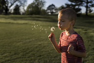 Boy blowing dandelion seeds at park - CAVF32384