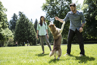 Happy couple playing with dog on grassy field in park - CAVF33053