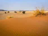 Africa, Namibia, Namib desert, Naukluft National Park, Sossusvlei, Elim dune - RJF00766