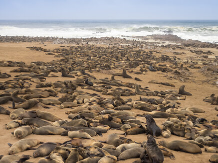 Africa, Namibia, Cape Cross Seal Reserve, colony of cape fur seal - RJF00778