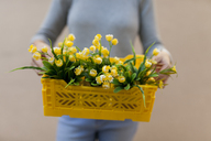 Close-up of woman holding yellow spring flower box - VABF01538