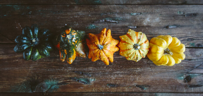 Row of five Ornamental pumpkins on wood - GIOF03881