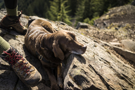 High angle view of dog sitting on rock at mountain cliff - CAVF34005