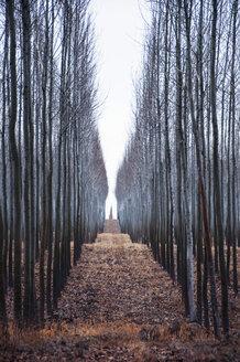 Path among trees - CAVF34375